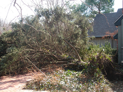 Fallen Tree and Insurance